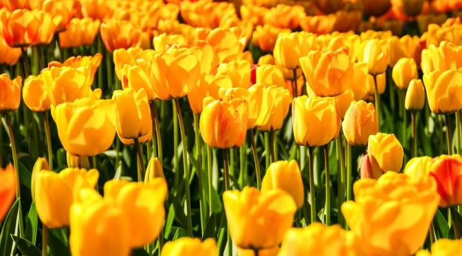 flowers-1283427_1280